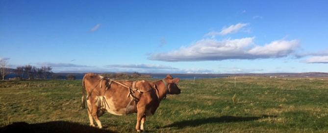 scotlandhour agritourism